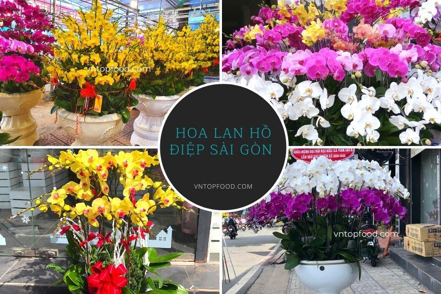 Hoa Lan Hồ Điệp Sài Gòn