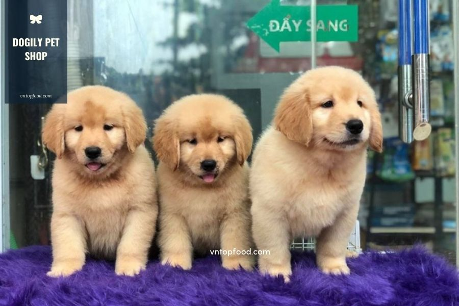Dogily Pet Shop