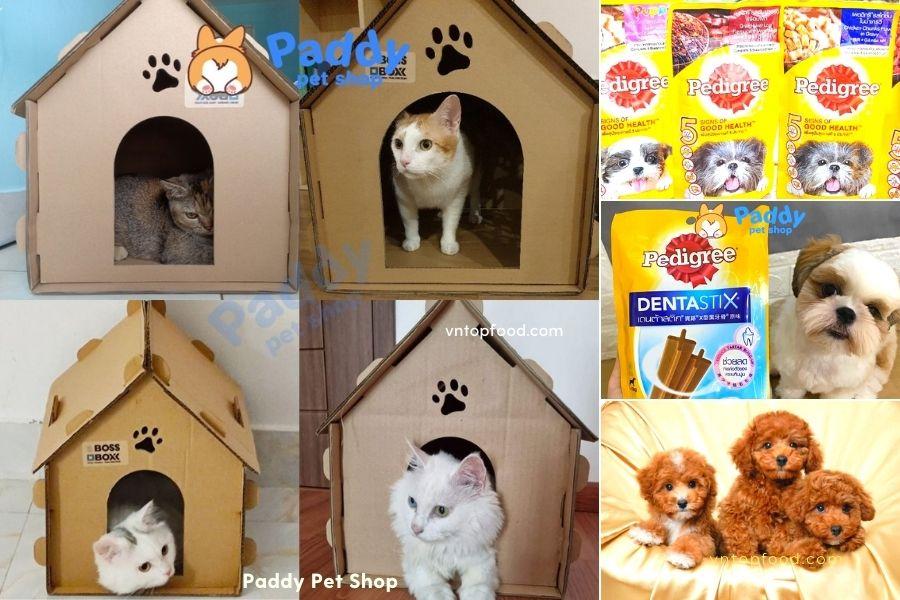 Paddy Pet Shop